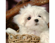 10 SUPER CUTE - Dogs in Wicker Furniture Pictures!