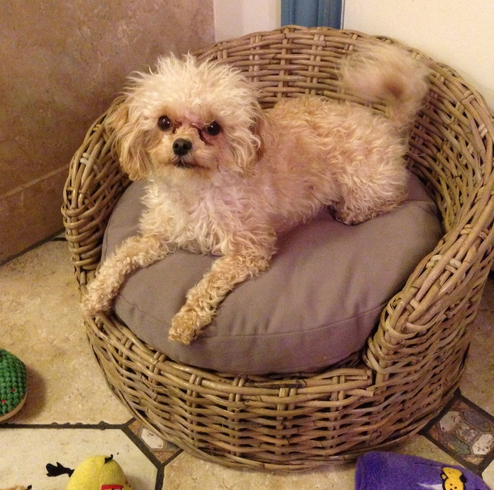 Wicker Dog Bed Small Pets Wicker Paradise