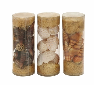 Beautiful Styled Sea Shells 3 Assorted By  Import - 38220 by Benzara