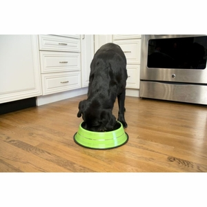 Iconic Pet - Color Splash Stripe Non-Skid Pet Bowl - 8 oz - Green