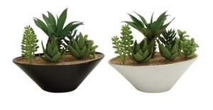 Mesmerizing 2 Assorted PVC Ceramic Succulent