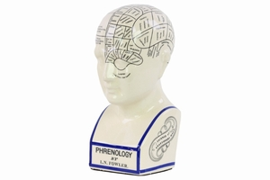 Phrenology Ceramic Bust with Printed Labels- Large- White- Benzara
