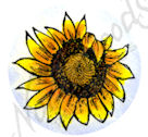 A9201 Baby Sunflower