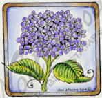B9476 Hydrangea Stem In Square