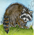 B9525 Small Raccoon