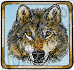 B9526 Wolf Face In Square