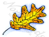 B9832 White Oak Leaf