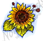 B9841 Small Sunflower Blossom
