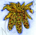 B9842 Small Indian Corn