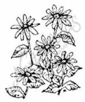 C542 Small Black-eyed Susan Cluster