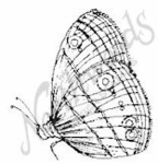 C6667 Butterfly 5 With Closed Wing