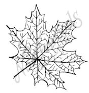 C7606 Maple Leaf With Veins