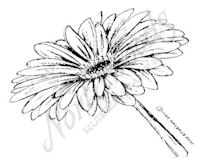 C8015 Single Gerbera Blossom And Stem