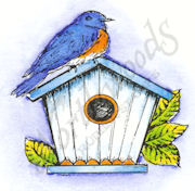C8420 Bluebird On Birdhouse