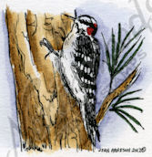 Downy Woodpecker On Tree C8877