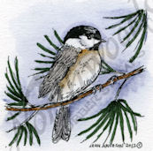C8883 Chickadee On Pine