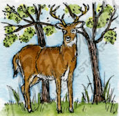 C9519 Buck In Trees
