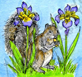 C9767 Squirrel And Iris