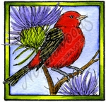 Scarlet Tanager In Square Frame - CC10183