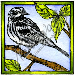 CC10187 Black And White Warbler In Square Frame