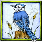 CC10193 Blue Jay In Square Frame