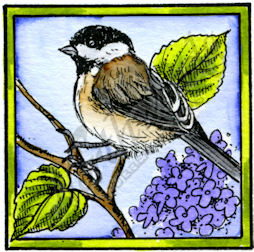 CC10194 Chickadee In Square Frame