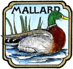 CC10207 Mallard In Curved Square