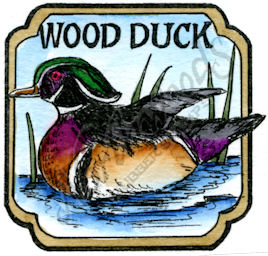 CC10208 Wood Duck In Curved Square