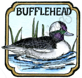 CC10209 Bufflehead In Curved Square