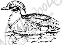 CC1752 Wood Duck