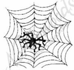 CC4702 Web With Spider