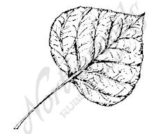 CC6229 Medium Paper Birch Leaf