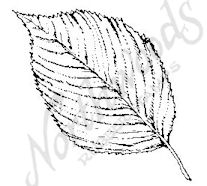 CC6230 Medium Elm Leaf