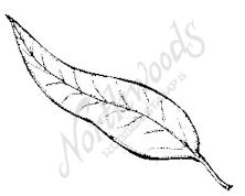 CC6231 Medium Weeping Willow Leaf