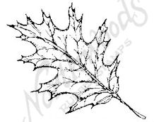 CC6234 Medium Red Oak Leaf