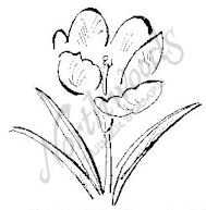 CC6632 Sketch Crocus
