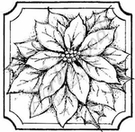 CC8240 Single Poinsettia In Notched Square