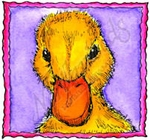 CC8458 Baby Duck In Deckle Square