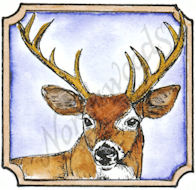 CC8533 Buck In Notched Square