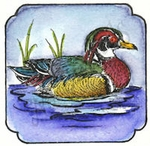 CC9047 Wood Duck In Curved Frame