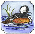 CC9048 Bufflehead In Curved Frame
