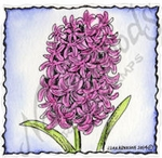 CC9480 Hyacinth In Deckle Square