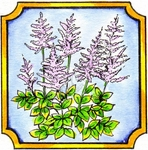 CC9926 Astilbe In Notched Square