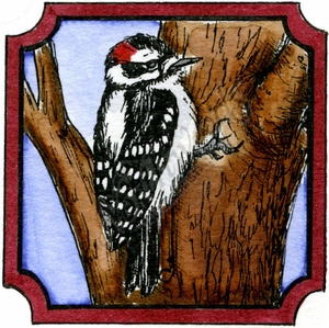 CC9980 Woodpecker In Notched Square