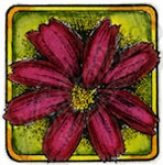 B9448 Cosmos Blossom In Small Square