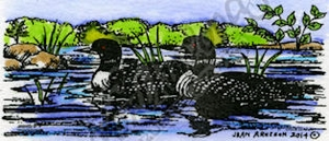 D9510 Loon Pair In Water