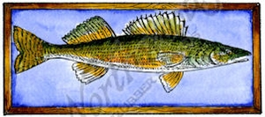 D9739 Walleye In Frame