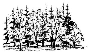 E1619 Tree and Pine Cluster