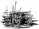 E1628 Cattails and Water