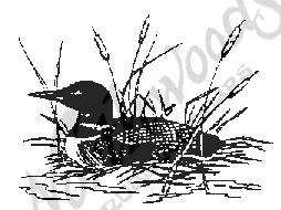 E604 Common Loon - Small